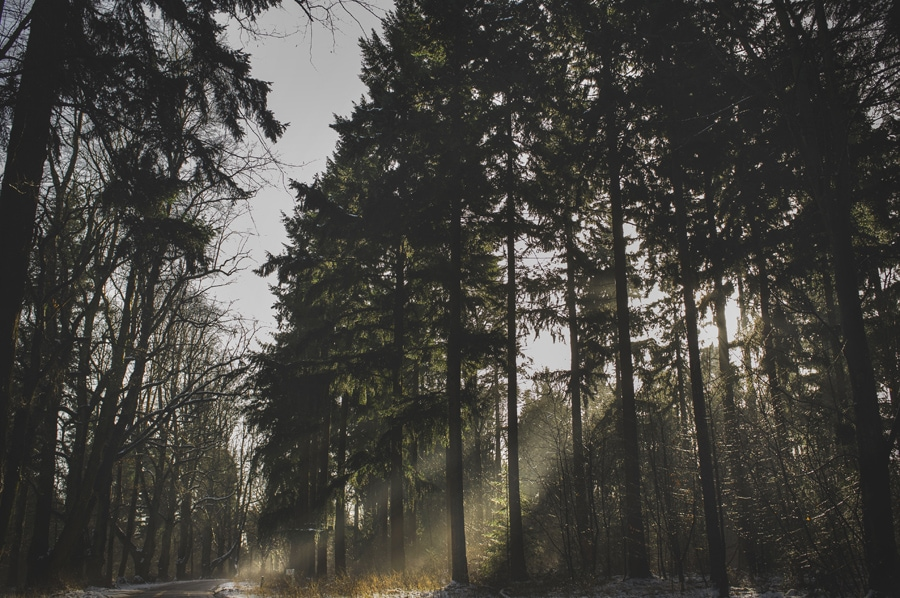 light coming through the trees