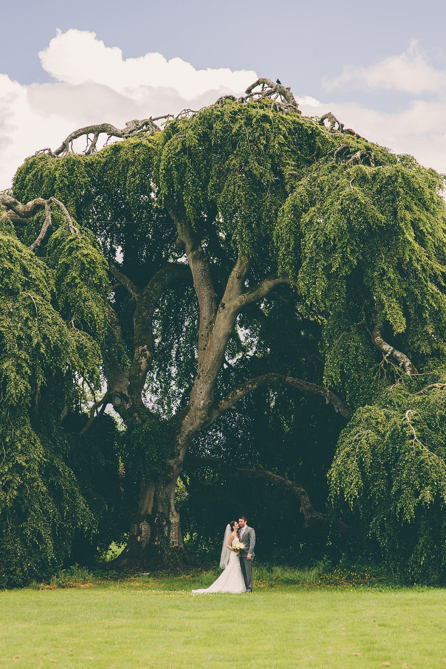 wedding portraits under a tree