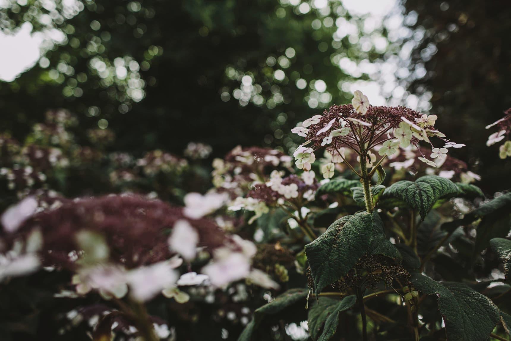 sezincote house gardens